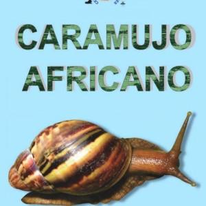 caramujo-site1