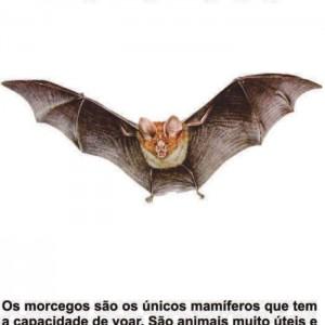 morcego21