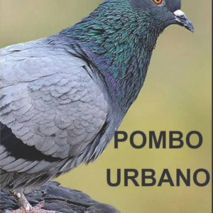 pombo-site1