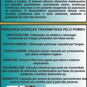 pombo-site2